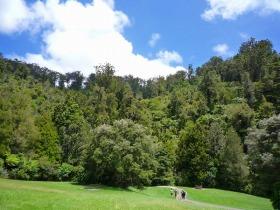 カウリの巨木とワイナリー訪問! マタカナ半日観光【日本語ガイド / 午前または午後】