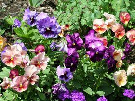 お花好きの方におススメ!コンテストで入賞ガーデンツアー【日本語ガイド】