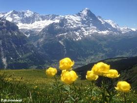 フィルストとバッハアルプゼー・ハイキング1日ツアー 【期間限定6月~10月下旬】