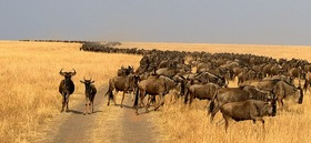 ナイロビ発 マサイマラ国立保護区でサファリキャンプ 2泊3日の旅(英語混載ツアー)