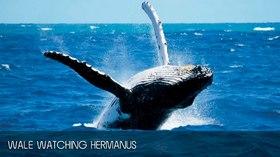 クジラウォッチングツアー