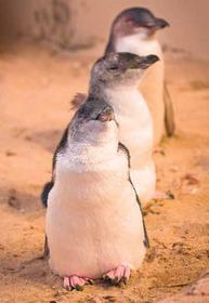 「プレミアムヴューイングエリア(特別席)確約」ペンギンパレード&動物園&ファーム体験1日デラックスツアー