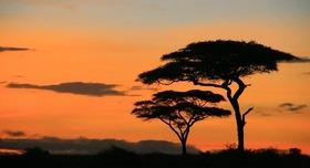 タンザニアサファリ3泊4日の旅 [キリマンジャロ空港往復送迎付き]又は [アルーシャ市内往復送迎付き]