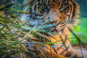 タロンガ動物園入場チケットとシドニー湾クルーズ【2日間パスまたは往復フェリー】