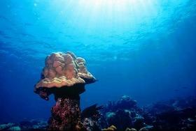 トゥンク・アブドゥル・ラーマン海洋公園で体験ダイビング