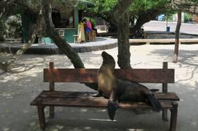 ガラパゴス最大の島イザベラ島で過ごす2日間【サンタクルス島発】