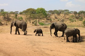 動物の楽園タンザニアプライベートサファリ2泊3日の旅-マニヤラ湖・ンゴロンゴロ [アルーシャ発]
