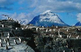 南米最南端のウシュアイアでペンギンを見よう!【期間限定11月~3月】