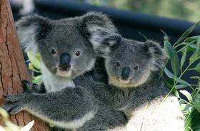 シドニーを代表する動物園 タロンガズー