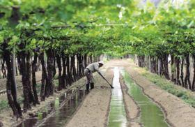 アルゼンチン最大のワイン産地、メンドーサのワイナリー巡り1日ツアー【ランチ付き】