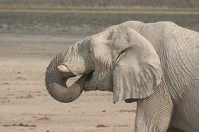 野生動物からナミブ砂漠までナミビアの見所を網羅!テイスト・オブ・ナミビア5泊6日キャンプツアー【英語ガイド/ウィントフーク発着】