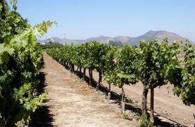 コンチャイ・トロ、南米最大ワインメーカーのワイナリーを見学しよう!【サンティアゴ発】