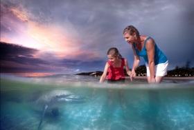 期間限定!イルカとクジラに会えるタンガルーマドルフィン・ホエールウォッチングクルーズ【ブリスベン発着/ランチ付/イルカの餌付け付または無し/6月~10月までの催行】