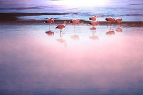 フラミンゴの集まるアタカマ塩湖とトコナオ村観光【サン・ペドロ・デ・アタカマ発】