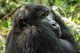 キリマンジャロ発ルワンダサファリ 野生のゴリラに出会う3泊4日【キリマンジャロ空港発着往復航空券付】