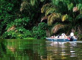 ボートで訪れる未開のジャングル・トルトゥゲーロ国立公園【サンホセ発着】