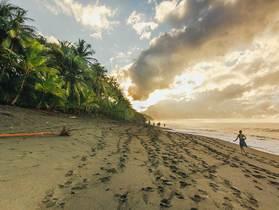 熱帯雨林のパラダイス!コルコバード国立公園&カーニョ島3泊4日【サンホセ~コルコバード発着往復航空券/ホテル3泊】
