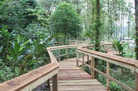 シンコ・セイバス熱帯雨林アドベンチャーパーク【サンホセ発着】