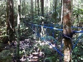 ジャングルで就寝!半日アマゾントレッキング【マナウス発】