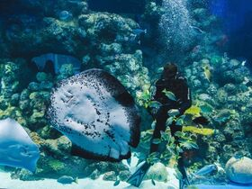 ケアンズ水族館でシャークダイビング