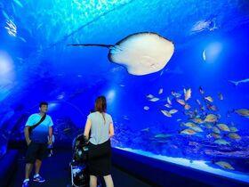 ちょっと早めの夕食を楽しむ!ケアンズ水族館トワイライトツアー【夕食付 】