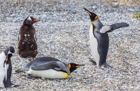 ガブレ島ペンギンウォッチング1日ツアー [期間限定 4月~10月]