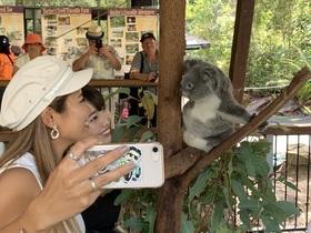 ハートリース動物園 ケアンズ送迎付き【選べる写真付き&コアラと朝食プラン / 半日または1日ツアー】