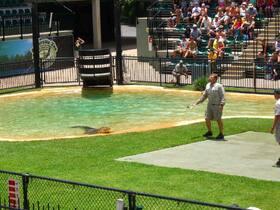 世界的に有名なオーストラリア動物園【ゴールドコースト発】