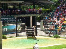 世界的に有名なオーストラリア動物園【ブリスベン発】