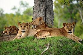 ザンジバル発着 動物たちがすぐそこに!動物保護区 サーダニ国立公園近くに泊まる2泊3日【ザンジバル発着フライト / 宿泊 BABS' CAMP 2泊 / ゲームサファリ / 全食事付き】