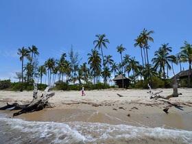 ダルエスサラーム発着 アフリカで唯一インド洋に面した動物保護区 サーダニ国立公園に泊まる2泊3日【ダルエスサラーム発着フライト / 宿泊2泊 / ゲームサファリ / 全食事付き】