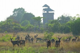 ヨハネスブルグ発着 動物たちがすぐそこに!動物保護区 サーダニ国立公園近くに泊まる3泊4日【ヨハネスブルグ発フライト(ダルエスサラーム経由) / 宿泊 BABS' CAMP 3泊 / ゲームサファリ / 全食事付き】