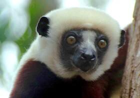 『アイアイ』に会いに行く! マダガスカルの自然、動物たちに出会う4泊5日【ナイロビ発着往復航空券 / 空港送迎 / 宿泊4泊 / 日本語ガイド / 全食事】