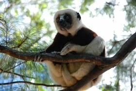 『アイアイ』に会いに行く! マダガスカルの自然、動物たちに出会う6泊7日【パリ・シャルル・ド・ゴール発着往復航空券 / 空港送迎 / 宿泊4泊+機内2泊 / 日本語ガイド / 全食事】