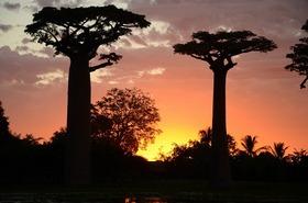 バオバブの木で有名なモロンダバ 4泊5日【ナイロビ発往復航空券 / 空港送迎 / アンタナナリボ市内2泊+モロンダバ2泊 / 英語ガイド / 全食事】