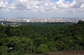 大都会サンパウロのオアシス!カンタレイラ州立公園エコツアー【英語ガイド】