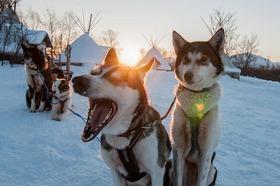 犬ぞり体験、アイスドーム&トナカイファーム観光【ドリンク&軽食付 / 12~3月】
