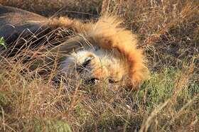マサイマラ国立保護区&ナクル湖国立公園 壮大な自然満喫!6日間【ニューヨーク発航空券 / 日本語ガイド / マサイマラ3泊 / アクティビティー】