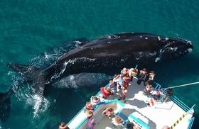 バルデス半島クジラウォッチング【英語ガイド】