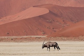 まるで絵画の世界 ナミブ砂漠 ソーサスフレイで砂漠体験 4日間【ウィントフーク発着 / 宿泊3泊 / 全食事 / アクティビティー】