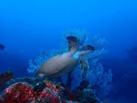 八丈ブルーの海を120%体感!ファンダイビング【東京都八丈島】