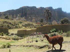 南米在住スタッフがボリビアについてお答えします!【オンライン体験/Zoom利用/ プライベート催行】