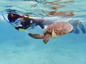 奄美大島でウミガメと泳ぐ!シュノーケリング【奄美大島笠利町】