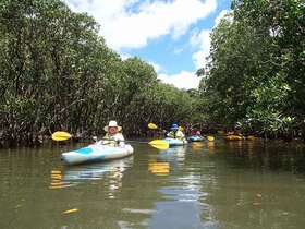 黒潮の森 マングローブパークでカヌー体験!【奄美大島住用町】