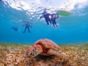 憧れのウミガメに会いに行こう!ネバーランド ウミガメ探検シュノーケル【奄美大島笠利町】