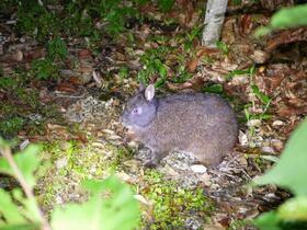 珍しい夜行性動物に会いに行こう!夜の野生生物観察コース【奄美大島名瀬】