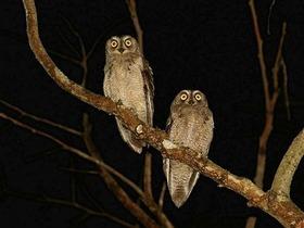 あまみ de ナイト!奄美の夜の生き物たちと出会おう【奄美大島瀬戸内町】