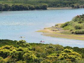 マングローブでサバイバル川下り!スリルを楽しむカヌーツーリング【奄美大島住用町】
