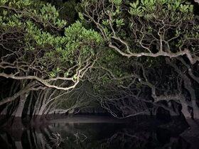 カヌーツーリングで神秘的な夜のマングローブを探検!【奄美大島住用町】