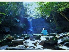 1日ツアー!「ちょうどいい距離」の森林浴でのんびりリフレッシュ【西表島】
